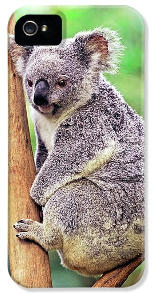 Koala iPhone 5 Case - Koala In A Tree by Bildagentur-online/mcphoto-schulz