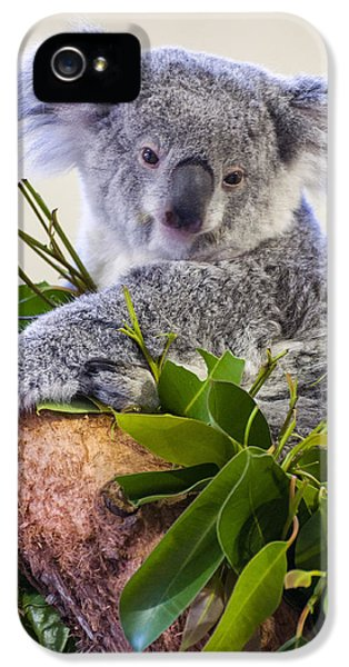 Koala On Top Of A Tree IPhone 5 Case