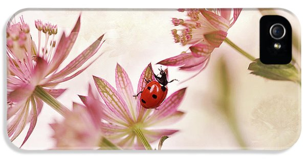 Ladybird And Pink Flowers IPhone 5 Case