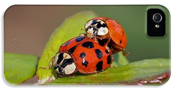 Ladybird Coupling IPhone 5 / 5s Case by Rona Black