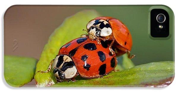 Ladybird Coupling IPhone 5 Case