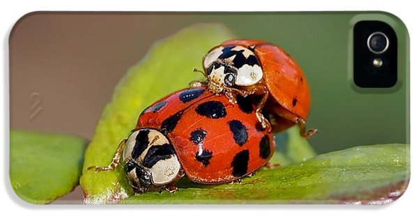 Ladybird Coupling IPhone 5 Case by Rona Black