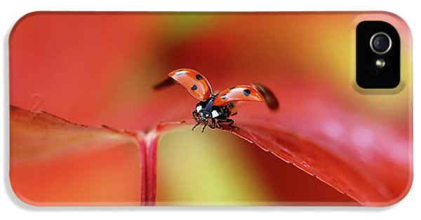 Ladybird In Autumn IPhone 5 Case