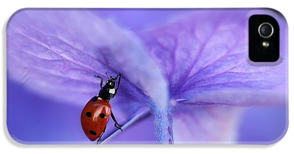 Ladybird On Purple Hydrangea IPhone 5 Case