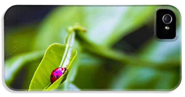 Ladybug iPhone 5 Case - Ladybug Cup by Marvin Spates
