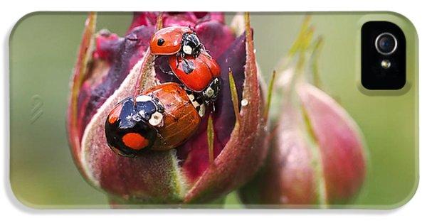 Ladybug Foursome IPhone 5 Case by Rona Black