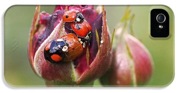Ladybug Foursome IPhone 5 / 5s Case by Rona Black