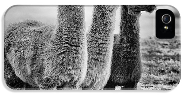 Rural Scenes iPhone 5 Case - Lama Lineup by John Farnan