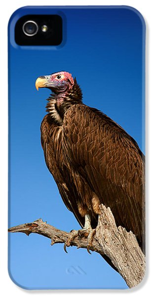 Lappetfaced Vulture Against Blue Sky IPhone 5 Case