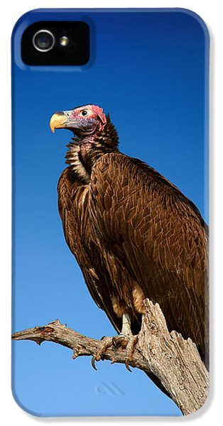 Lappetfaced Vulture Against Blue Sky IPhone 5 Case by Johan Swanepoel