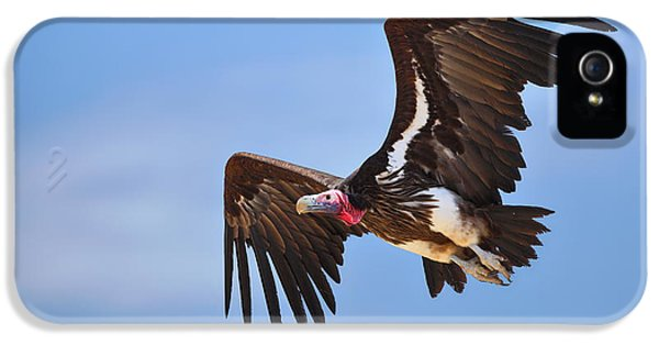 Lappetfaced Vulture IPhone 5 Case by Johan Swanepoel