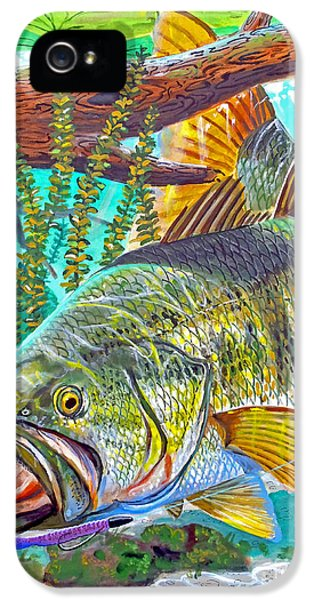 Catfish iPhone 5 Case - Largemouth Bass by Carey Chen