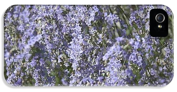 Beautiful iPhone 5 Case - #lavender by Georgia Fowler