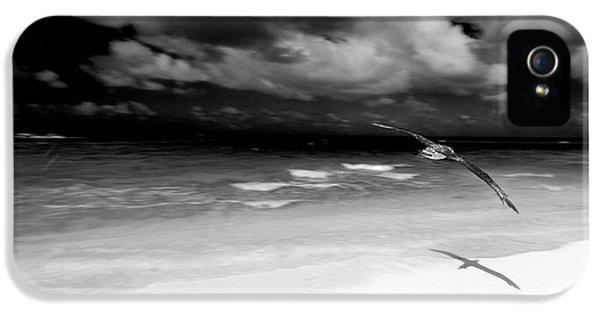 Laysan Albatross French Frigate Shoals IPhone 5 Case by Paul D Stewart