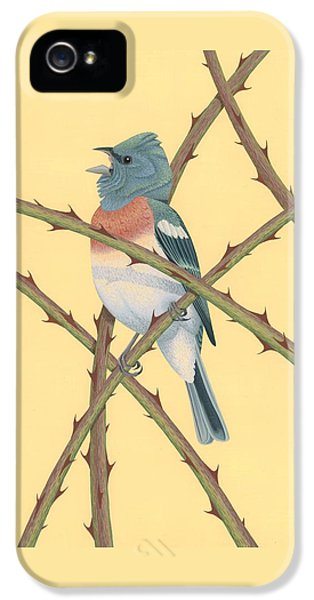 Lazuli Bunting IPhone 5 Case by Nathan Marcy