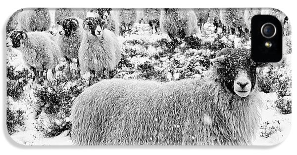 Sheep iPhone 5 Case - Leader Of The Flock by Janet Burdon