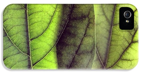 Green iPhone 5 Case - Leaf Abstract by Christy Beckwith