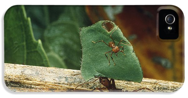 Leaf-cutter Ants IPhone 5 Case by Gregory G. Dimijian