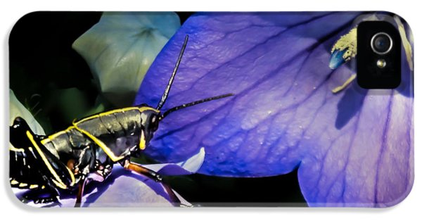 Contemplation Of A Pistil IPhone 5 Case by Karen Wiles