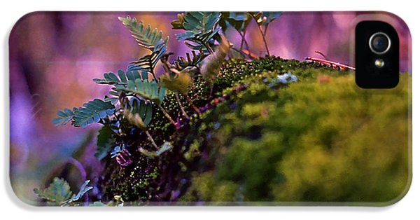 Leaves On A Log IPhone 5 Case by Bellesouth Studio