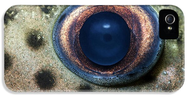 Catfish iPhone 5 Case - Leopard Sailfin Pleco Eye Abstract by Nigel Downer