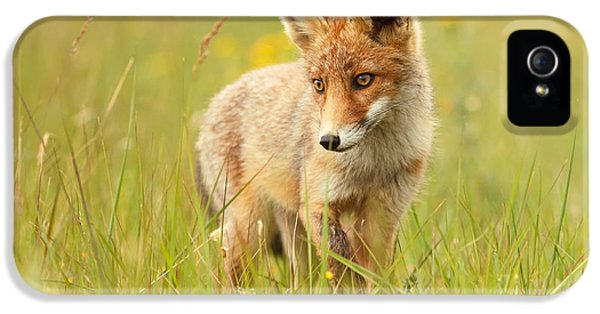 Lil' Hunter - Red Fox Cub IPhone 5 Case by Roeselien Raimond