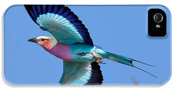 Lilac-breasted Roller In Flight IPhone 5 Case by Johan Swanepoel