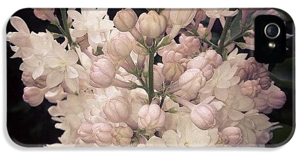 Beautiful iPhone 5 Case - Lilacs Are Blooming by Christy Beckwith