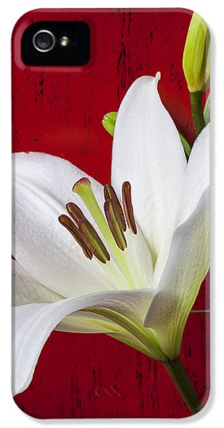Stamens iPhone 5 Case - Lily Against Red Wall by Garry Gay