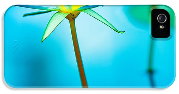 Lily iPhone 5 Case - Lily In Blue by Bill  Robinson