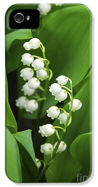 Lily-of-the-valley  IPhone 5 Case by Elena Elisseeva