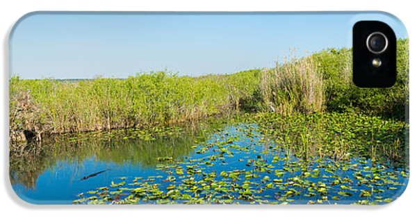 Anhinga iPhone 5 Case - Lily Pads In The Lake, Anhinga Trail by Panoramic Images