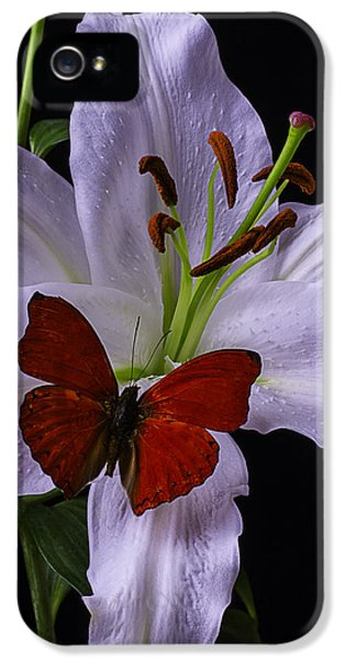 Stamens iPhone 5 Case - Lily With Red Butterfly by Garry Gay
