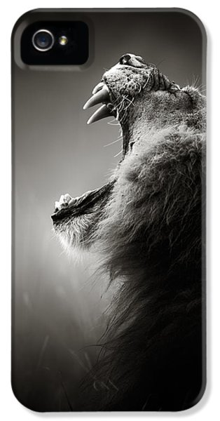 Lion Displaying Dangerous Teeth IPhone 5 Case by Johan Swanepoel