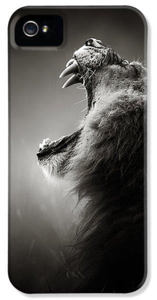 Cat iPhone 5 Case - Lion Displaying Dangerous Teeth by Johan Swanepoel