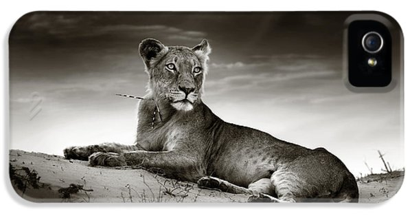 Lioness On Desert Dune IPhone 5 Case by Johan Swanepoel
