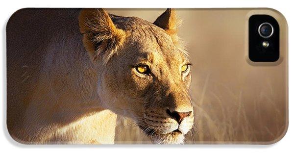 Lioness Portrait-1 IPhone 5 Case