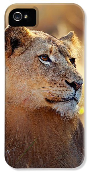 Lioness Portrait Lying In Grass IPhone 5 Case