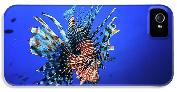 Lionfish IPhone 5 Case