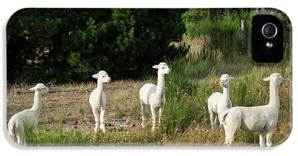Llama iPhone 5 Case - Llamas Standing In A Forest by Panoramic Images
