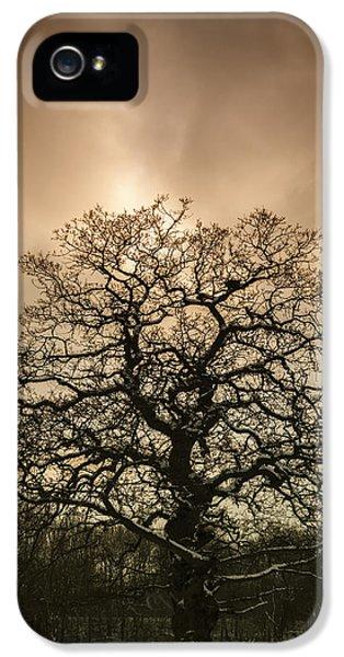 Lone Tree IPhone 5 Case by Amanda Elwell