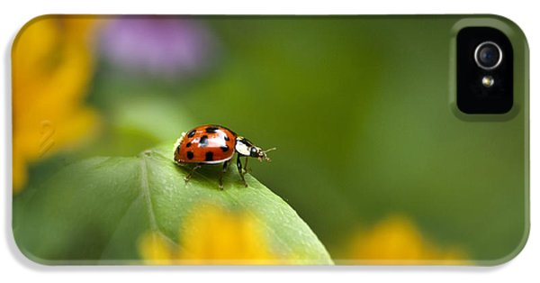 Lonely Ladybug IPhone 5 Case by Christina Rollo
