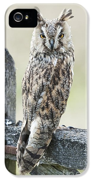 Long Eared Owl IPhone 5 Case by Tim Gainey