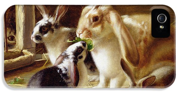 Lettuce iPhone 5 Case - Long-eared Rabbits In A Cage Watched By A Cat by Horatio Henry Couldery