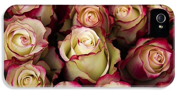 Love Is A Rose IIi IPhone 5 / 5s Case by Al Bourassa