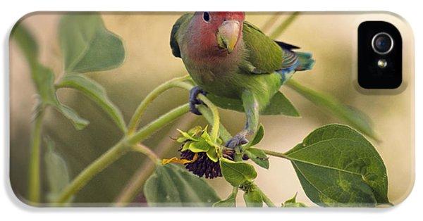 Lovebird On  Sunflower Branch  IPhone 5 / 5s Case by Saija  Lehtonen