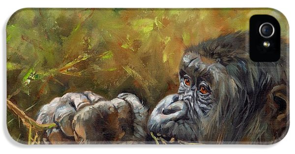 Lowland Gorilla 2 IPhone 5 / 5s Case by David Stribbling