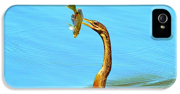 Anhinga iPhone 5 Case - Lunch On The Spear by Deborah Benoit