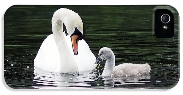 Lunchtime For Swan And Cygnet IPhone 5 / 5s Case by Rona Black