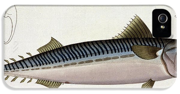 Mackerel IPhone 5 Case by Andreas Ludwig Kruger